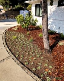 front yard transformation | design by: Cora Pederson, ID by Cora