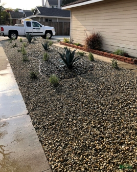 front yard transformation | lawn removal